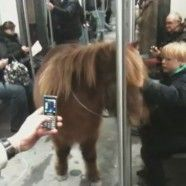 Berlin: Pony in S-Bahn Hit im Internet