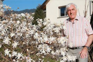 VOL.AT-Gartentipp: Die Stern-Magnolie