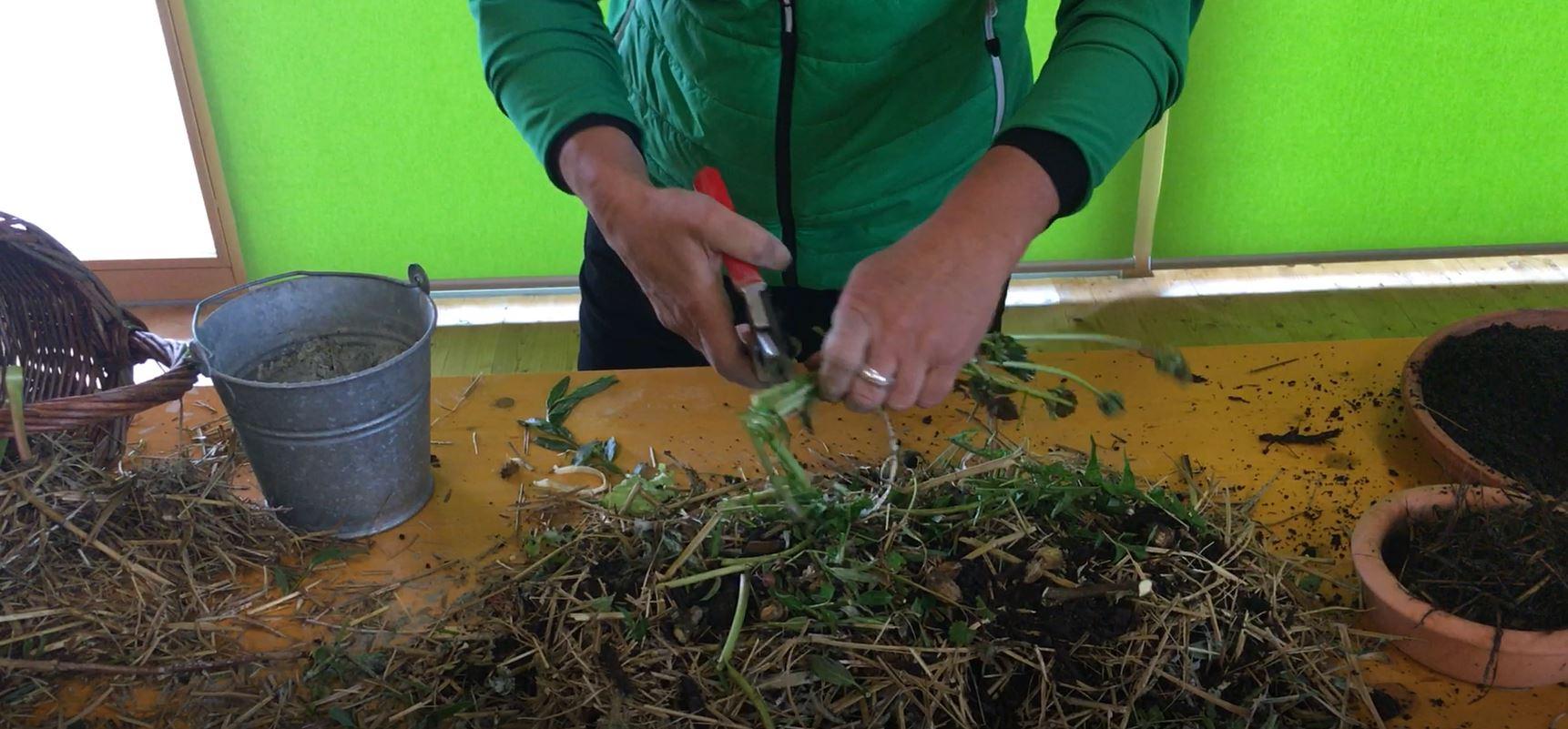 f nf tipps f r das richtigen kompostieren im hausgarten garten vol at. Black Bedroom Furniture Sets. Home Design Ideas
