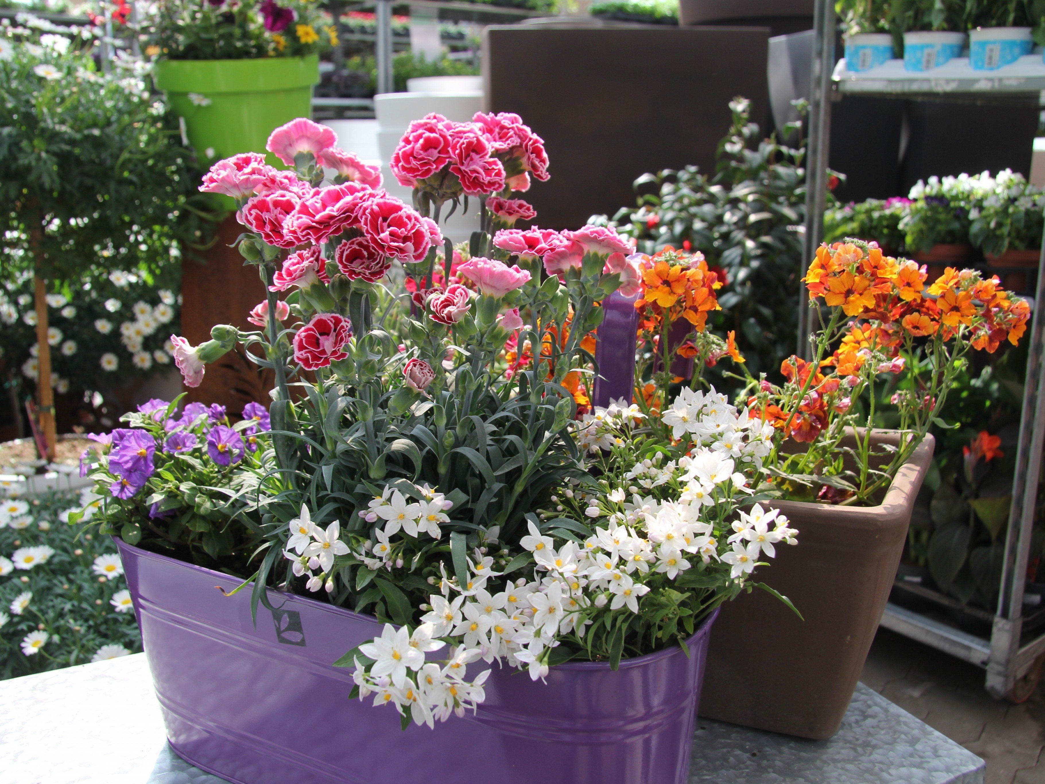 Der Baywa Gartentipp Auf Vol At Die Balkonblumen Garten Vol At