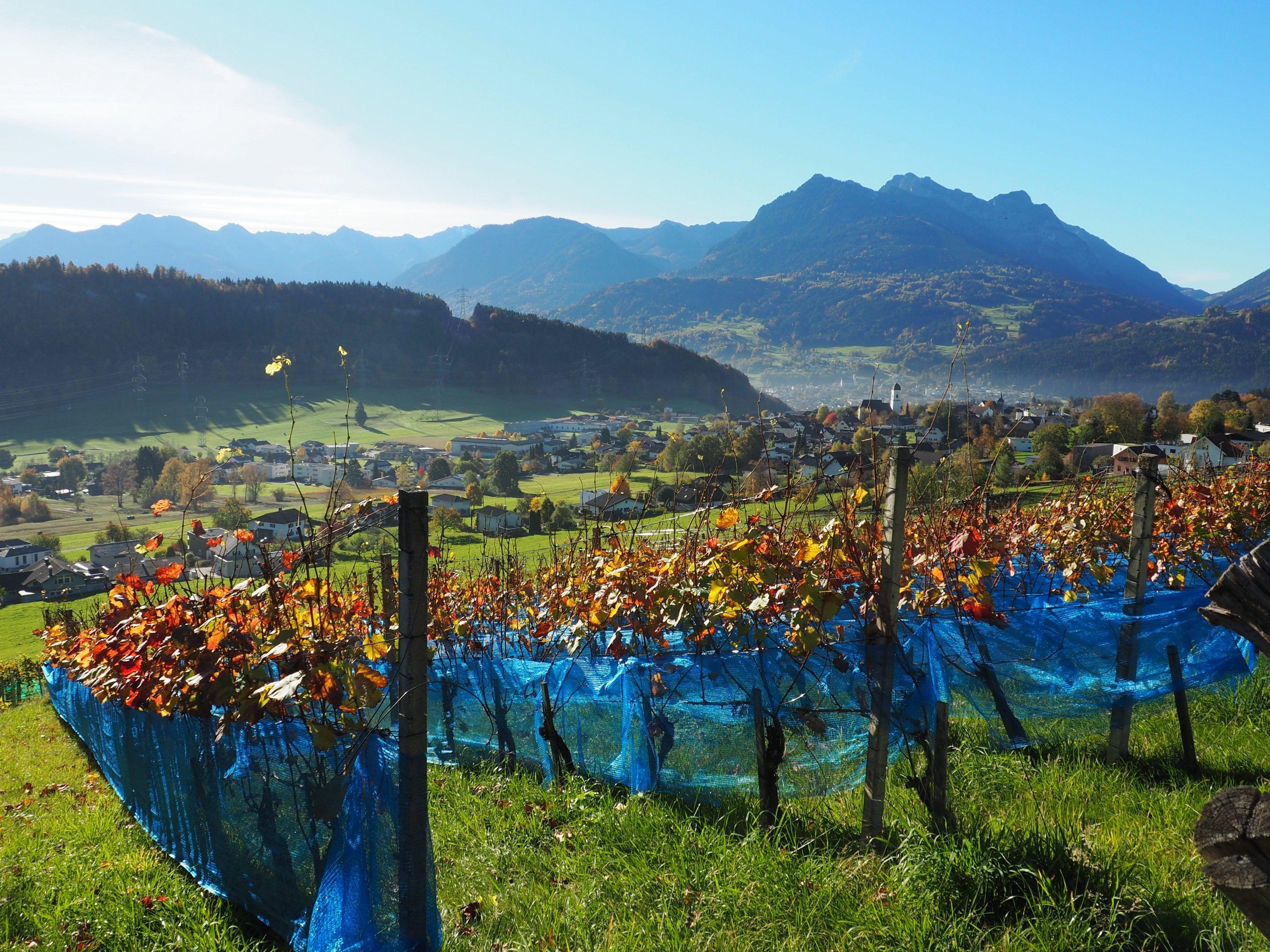 Sprachencafes in Vorarlberg | zarell.comation und Vielfalt in