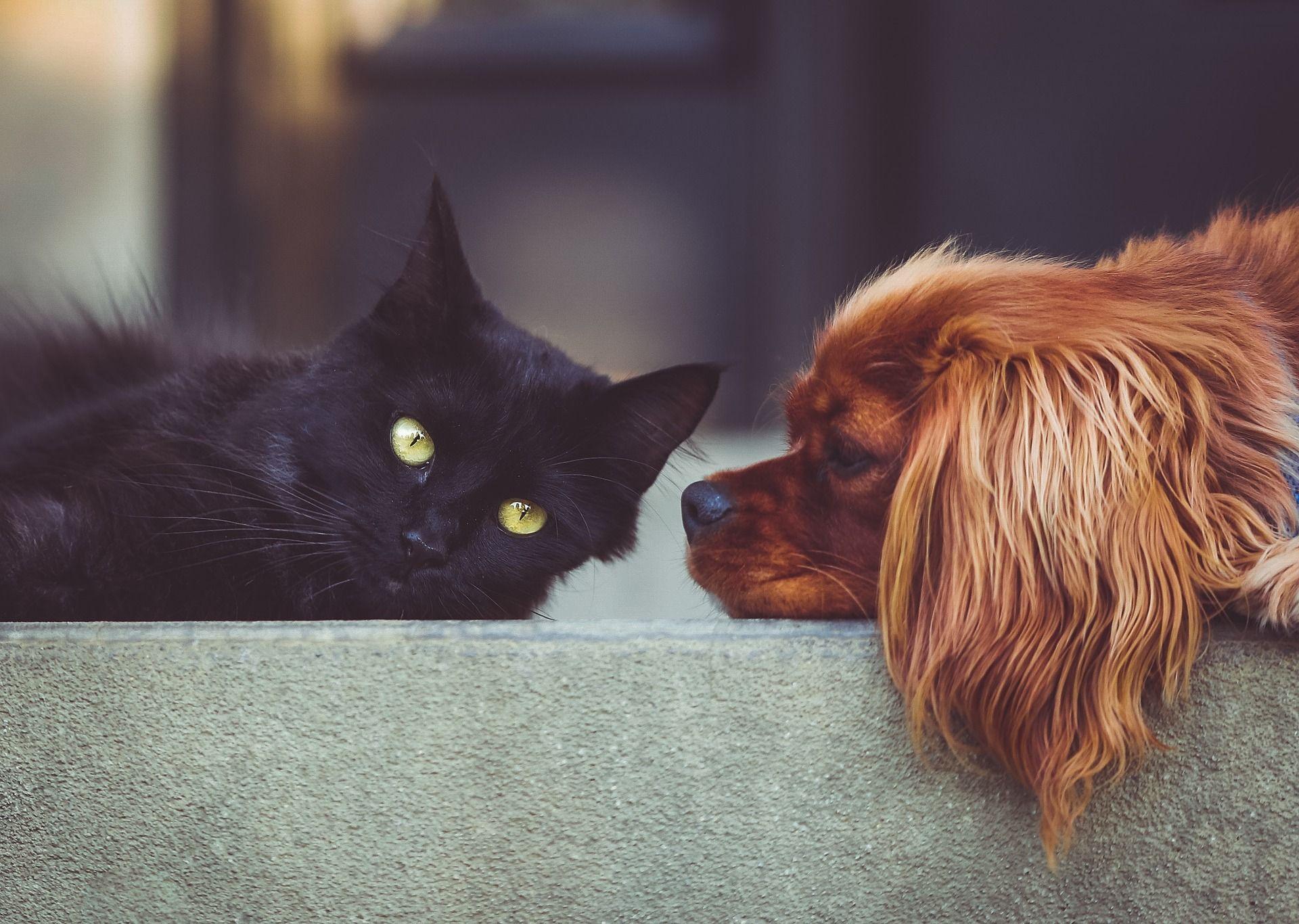 Partnersuche für tierliebhaber