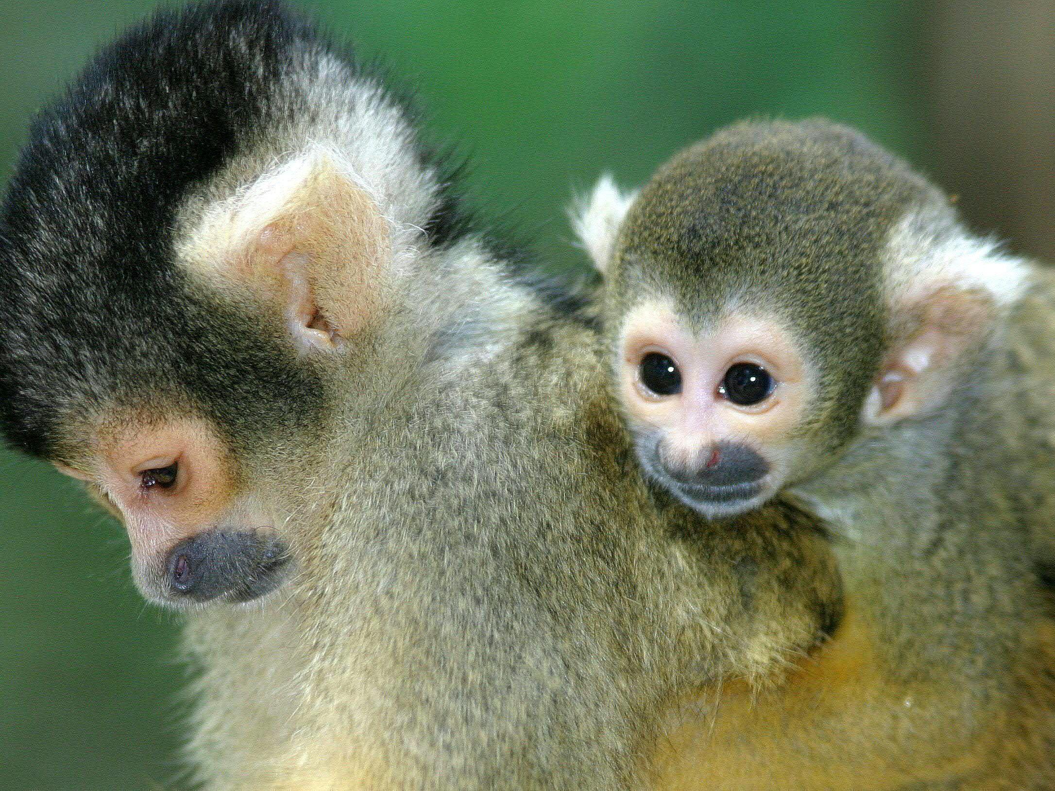 Dieselabgase: Deutsche Autohersteller unterstützen Versuche mit Affen