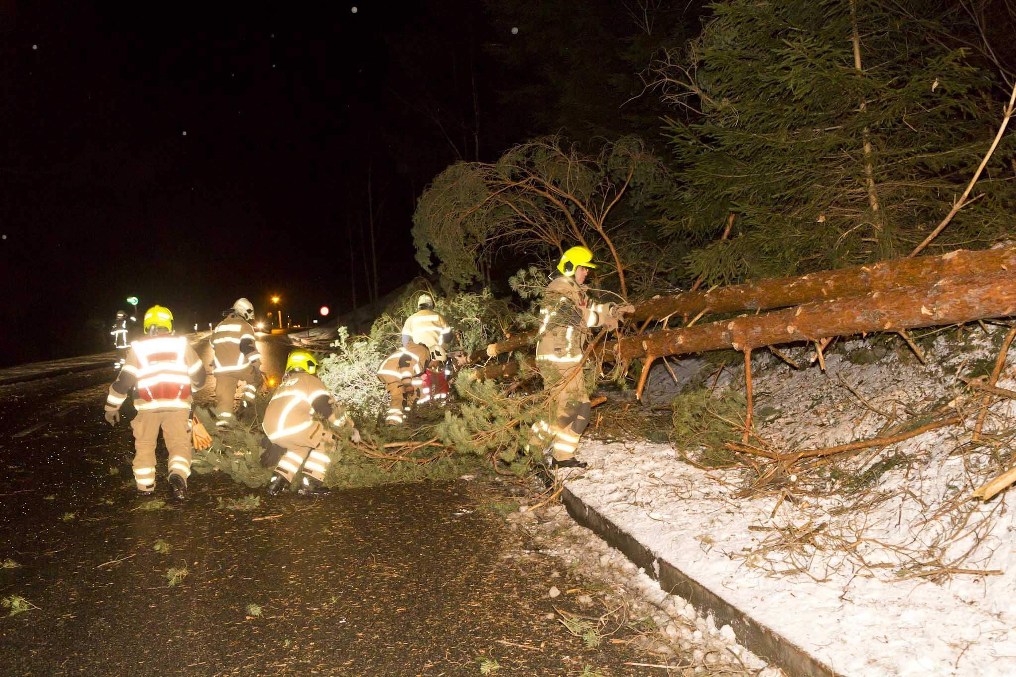 Vorarlberg: Baum in Übersaxen auf Straße gestürzt