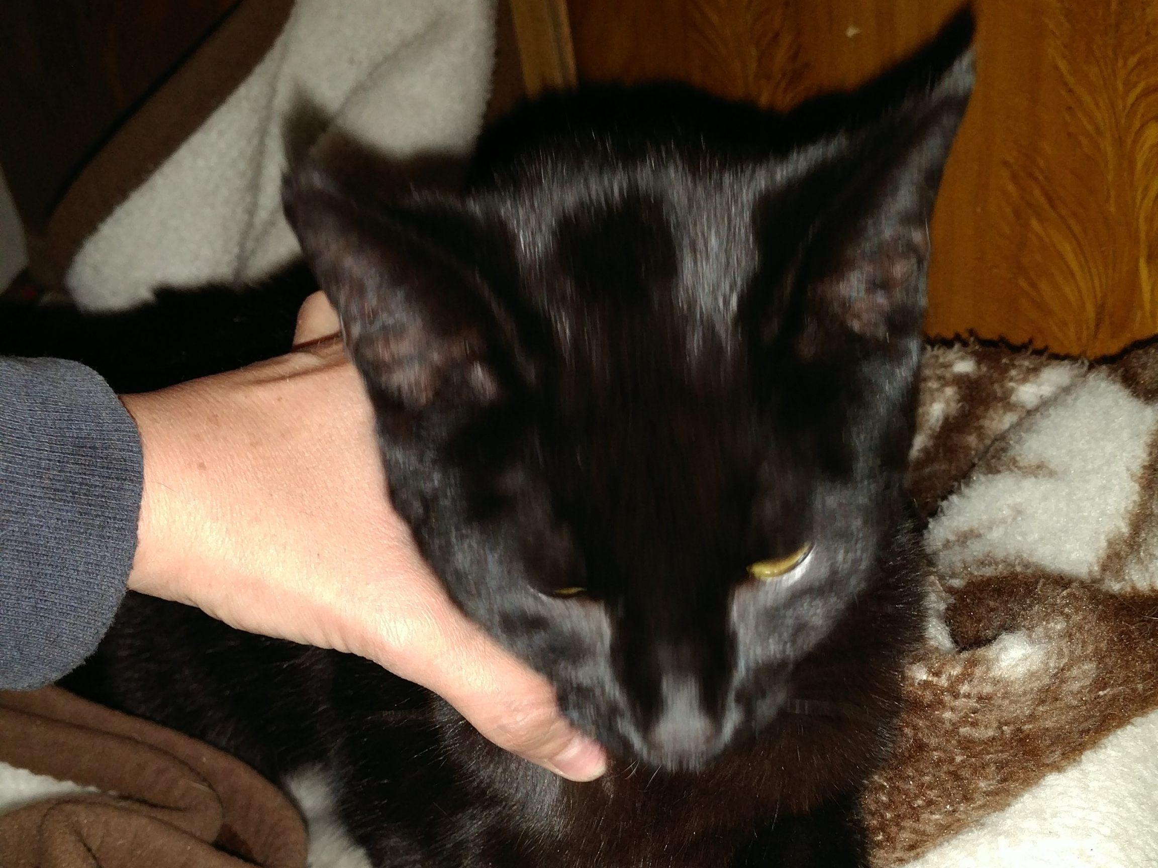 Schwarze Katze Zugelaufen Tierecke Vol At