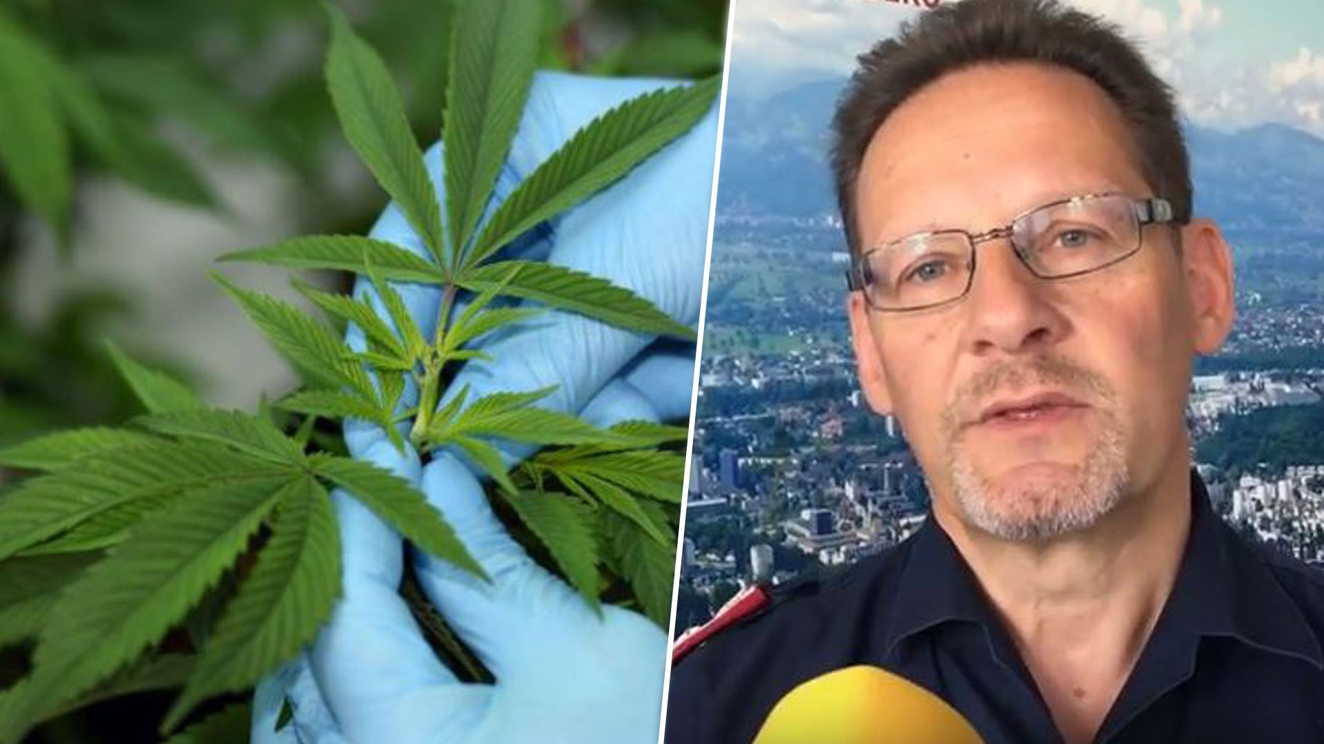 Nach Cobra-Einsatz in Lustenau: Das passiert mit den Cannabispflanzen