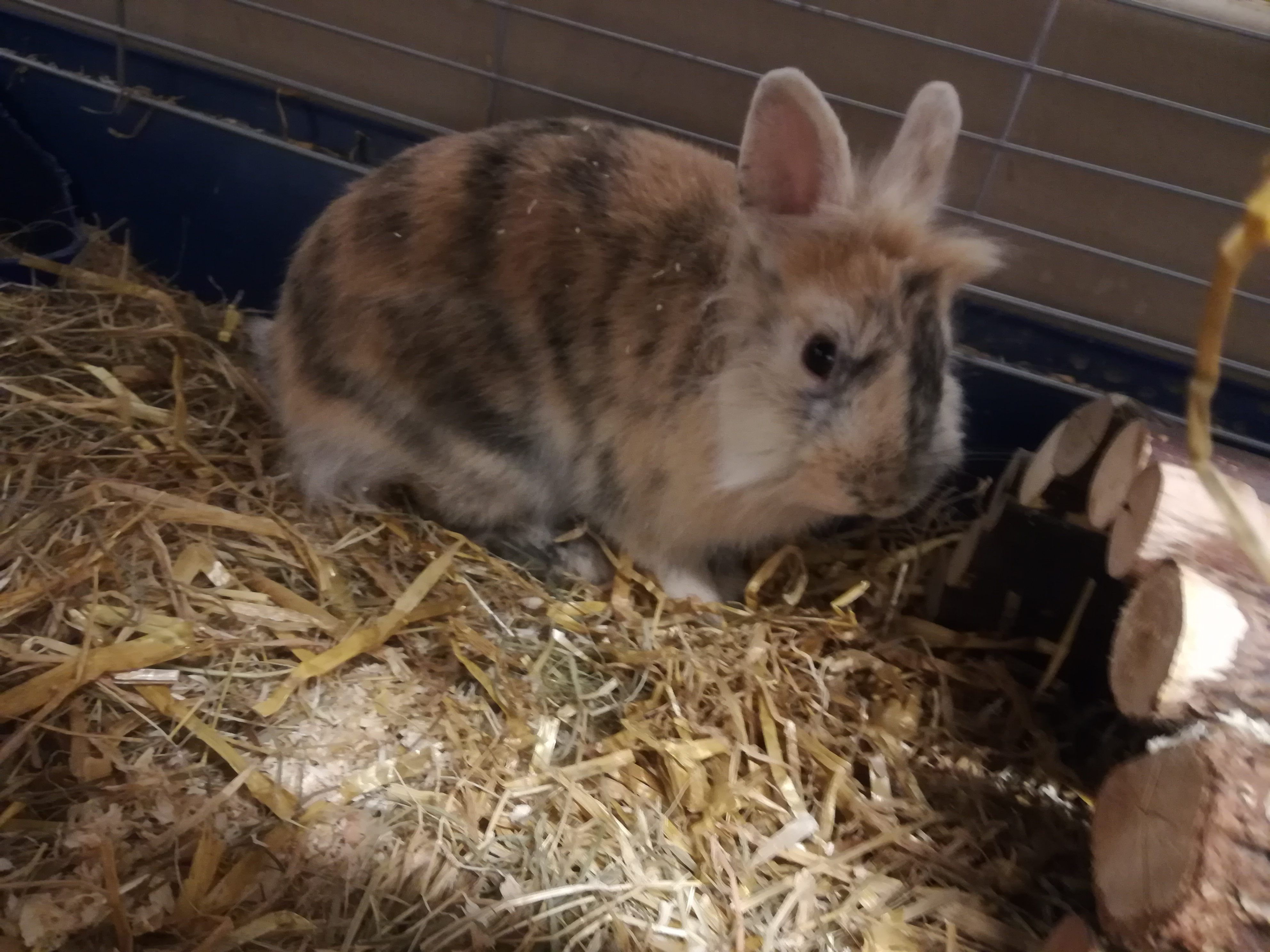 Kaninchen partnersuche