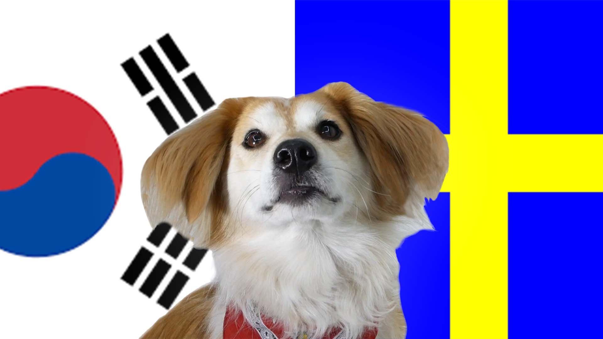 WM-Orakel mit VOL.AT Hund Cookie - Schweden vs. Südkorea