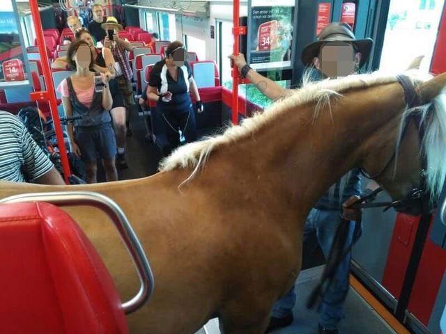 Österreicher nimmt Pferd mit in Regionalzug