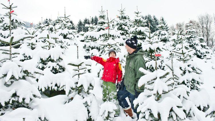 Weihnachtsbaum Natürlich.Ländle Christbaum Nur Echt Mit Dem Stern Advertorial Vol At