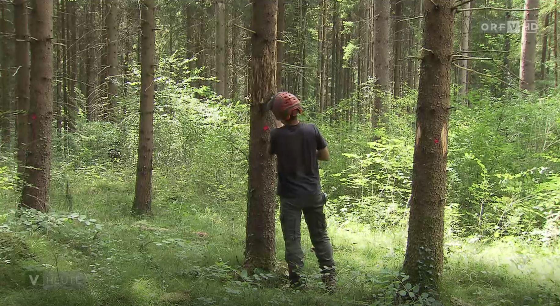 """""""Alarmstufe Rot"""": Land warnt vor Borkenkäferplage"""