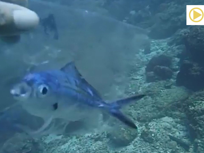 Fisch partnersuche