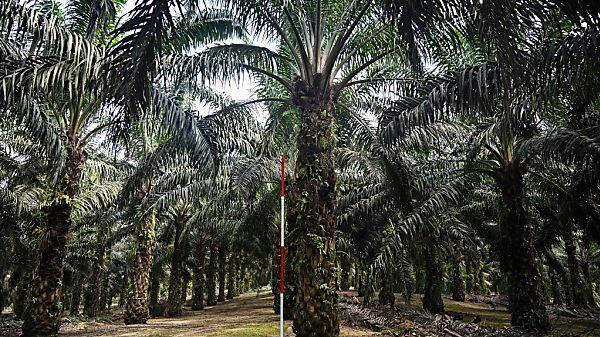 Malaysia-droht-EU-im-Palm-l-Streit-mit-Boykott-von-Kampfjets