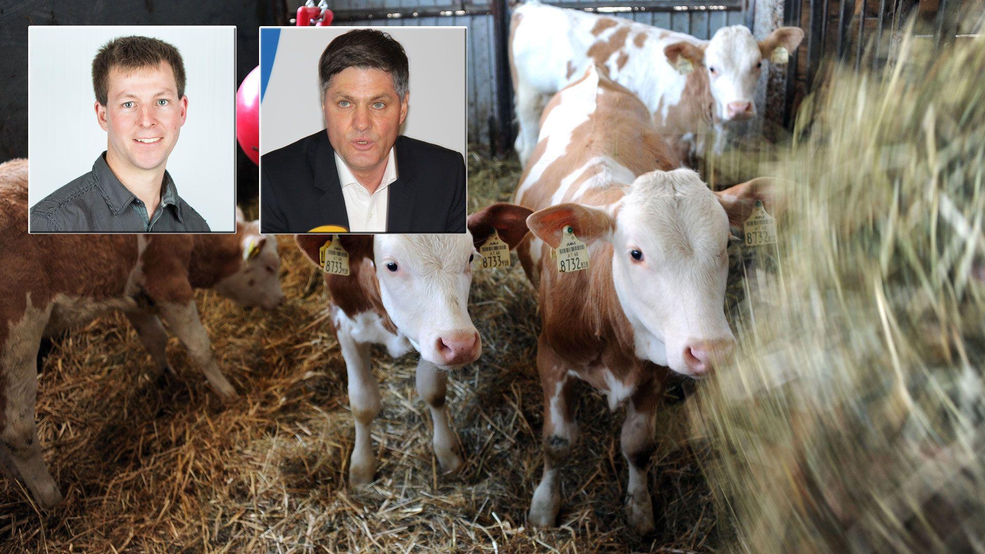 Vorarlberg: So reagieren die Parteien auf die Schlachthof-Pläne der Grünen