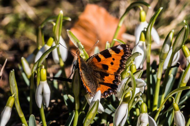 Der Frühling beginnt in Österreich warm und sonnig