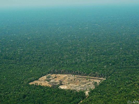 Bundesregierung setzt Brasilien-Projekte wegen Amazonas-Abholzung aus