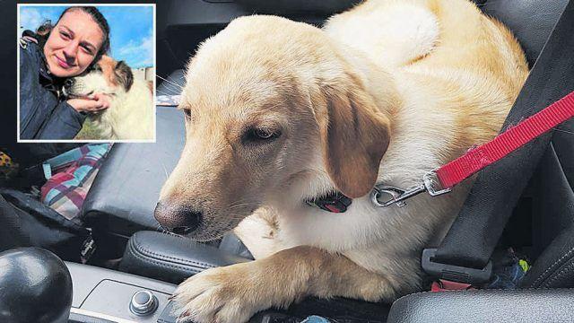 """Ein Jäger wird beschuldigt, den offenbar verhaltensauffälligen Hund """"Lenny"""" (Bild) auf Wunsch seiner Besitzer erschossen zu haben. Der Verein, der """"Lenny"""" vermittelte, hat Anzeige erstattet. Die Ermittlungen laufen"""
