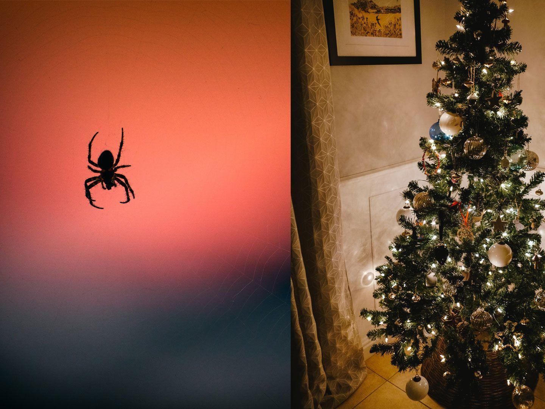 igitt diese insekten verstecken sich christbaum. Black Bedroom Furniture Sets. Home Design Ideas