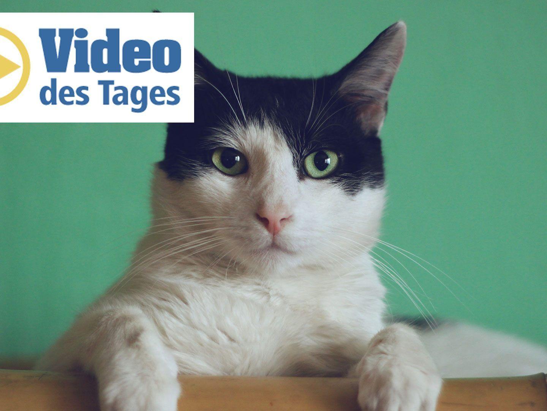 Anti Allergiker Katze