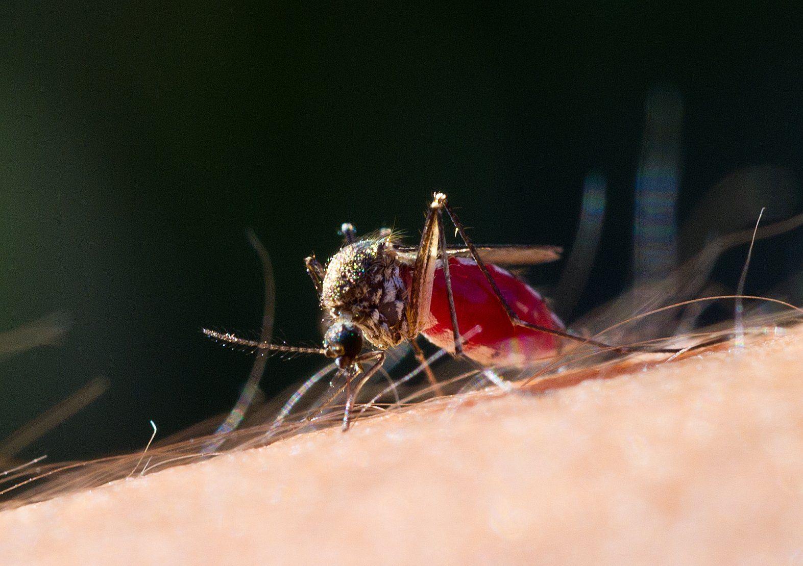 Mückenstiche Gefährlich