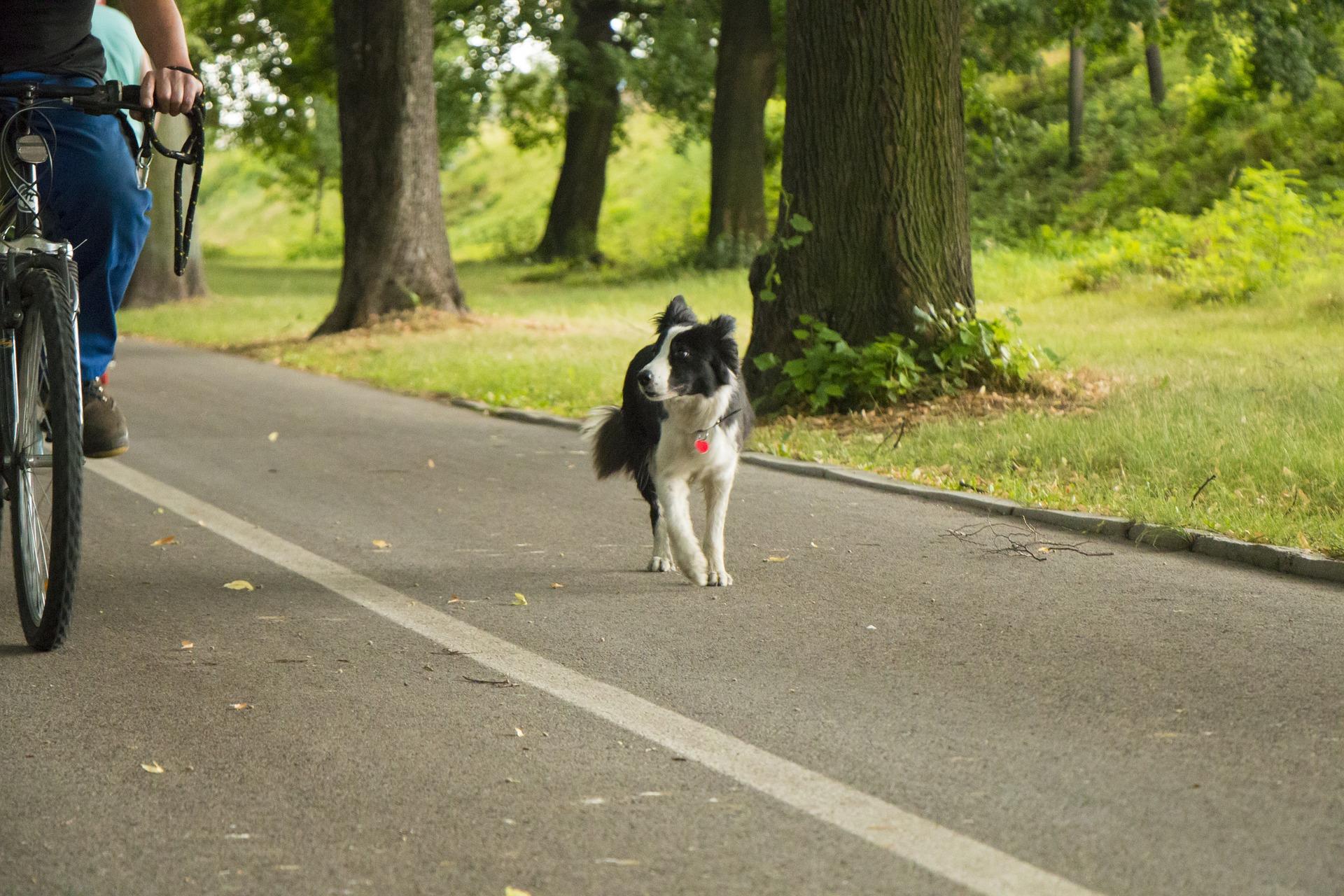 Hund verursacht Radunfall