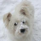 Mojo mag Schnee. - Mojo mag Schnee.