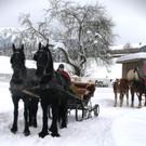 Pferde und Fahrer kehren zum Ausgangspunkt zurück - Pferde und Fahrer kehren zum Ausgangspunkt zurück