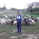 Ziegenherde in Cretoaia mit Boris im vergangenen Oktober 2012 - Ziegenherde in Cretoaia mit Boris im vergangenen Oktober 2012